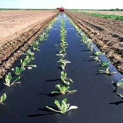 خرید نایلون مالچ کشاورزی ، قیمت نایلون مالچ کشاورزی